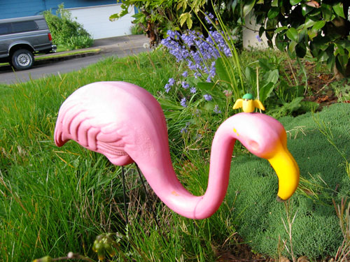 Canary Clay converses with his new friend, Rhonda the Flamingo.