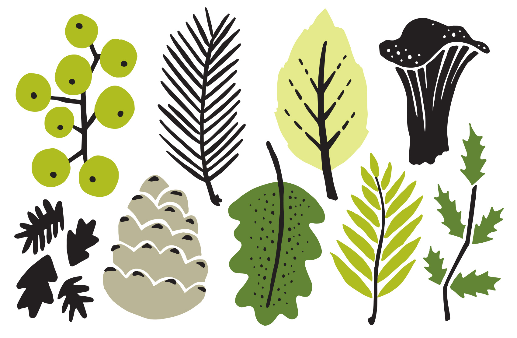 assortment of northwest inspired leaves and foliage